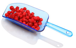 Berries frozen red currants in a blue scoop Royalty Free Stock Photo
