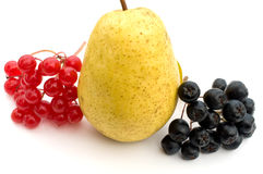 Berries and fruit. Clusters of berries of a guelder-rose and black chokeberry about a ripe yellow pear on a white background Stock Photos