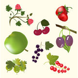 Berries and fruits Stock Image