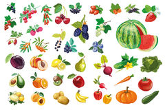 Berries, fruits and vegetables large collection Royalty Free Stock Image