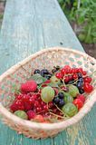 Berries. The gifts of summer in one basket royalty free stock photo