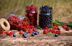 Berries in glass jars Stock Photo