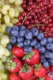 Berries and grapes Royalty Free Stock Photo