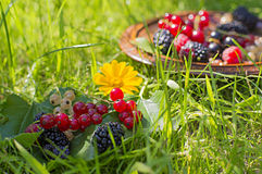 Berries on the grass Royalty Free Stock Images