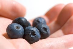 Berries in the Hand. A handful of fresh blueberries royalty free stock photos