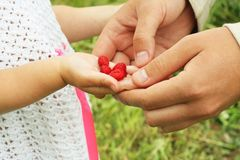 Berries in the hand Royalty Free Stock Photos