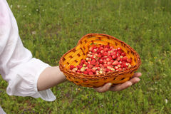 Berries in a hand Stock Images