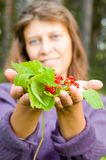 Berries in the hands of. Berries костяники in hands of the girl royalty free stock photos
