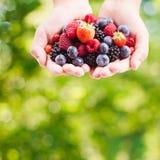 Berries in hands Stock Images