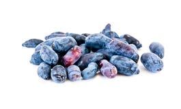 Berries honeysuckle Royalty Free Stock Photos