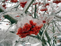 Berries in ice Stock Photos