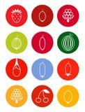 Berries icon set in bright tones Stock Image