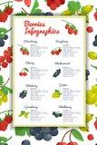 Berries Infographic Set Stock Photo