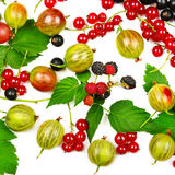 Berries isolated on white background. Berries black and red currants, gooseberries and blackberries isolated on white background Royalty Free Stock Image
