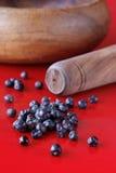 Berries of a juniper. Stock Image