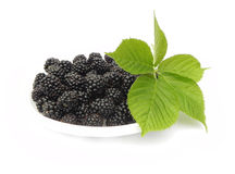 Berries and leaves of blackberry. Royalty Free Stock Photography