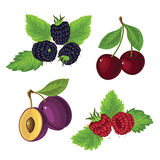 Berries with leaves Stock Photography