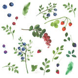 Berries and leaves on a white background. Blueberries, raspberries, blackberries and green branches Stock Photography