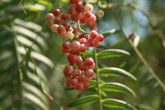 The berries on the light Royalty Free Stock Photography
