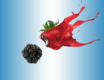 The Berries stock photography
