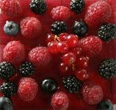 Berries mix dessert Stock Images