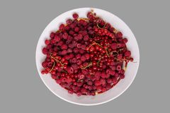 Berries mix with raspberry and red currant on grey background. Clipping path royalty free stock image