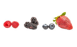 Berries Stock Photography