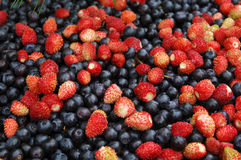 Berries mixture Royalty Free Stock Photography