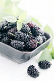Berries mulberry Royalty Free Stock Image