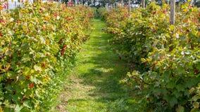 Berries nursery Stock Images