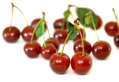 Berries Of A Cherry Stock Images