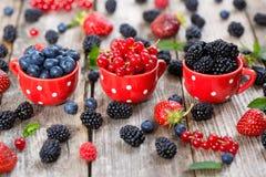 Berries from own garden - blueberries, currants, blackberries stock photography