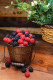 Berries in Pail on Rustic Wooden Table. Fresh picked blackberries and raspberries in a galvanized pail on a rustic wooden table. Vertical format Stock Images