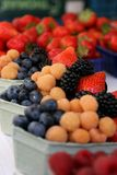 Berries in paper baskets Stock Image