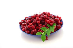 Berries on plate Stock Images