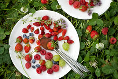 Berries in a plate Stock Photography