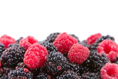 Berries: Raspberries And Blackberries Royalty Free Stock Photo