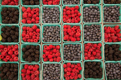 Berries raspberries blueberries and blackberries in a row Royalty Free Stock Image