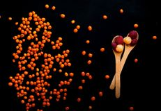 Berries raspberries and sea-buckthorn on a black background, close-up, natural light, top view. Berries raspberries and sea-buckthorn on a black background Stock Photos
