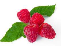 Berries of a raspberry Royalty Free Stock Photo