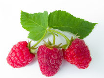 Berries of a raspberry Stock Photography
