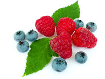Berries of a raspberry and blueberry Royalty Free Stock Images