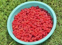 Berries of raspberry Royalty Free Stock Photo