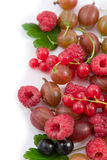 Berries: raspberry, gooseberry and currant Royalty Free Stock Photos