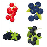 Berries. Red and black currants, blueberry, blackberry set Royalty Free Stock Image