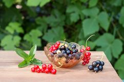 Berries of red black and white currant in a glass vase Royalty Free Stock Photo