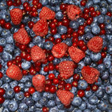 Berries and red currant. Close-up of  lots of fresh blueberries, raspberries and red currant Royalty Free Stock Photography