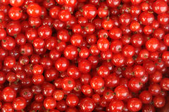 Berries of a red currant Stock Image