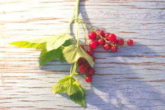 Berries of red currant on a blue wooden background. Stock Photography