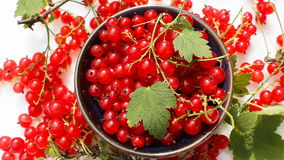 Berries of red currant stock video footage